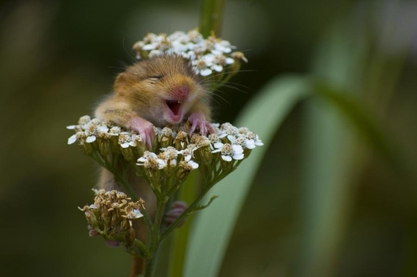 happy_mouse_flowers1