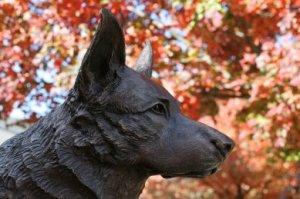 red dog 1