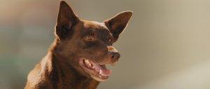 red dog 2