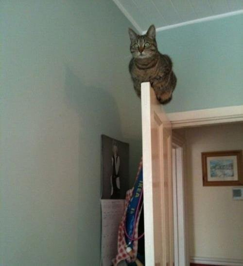 Monorail cat training simulator