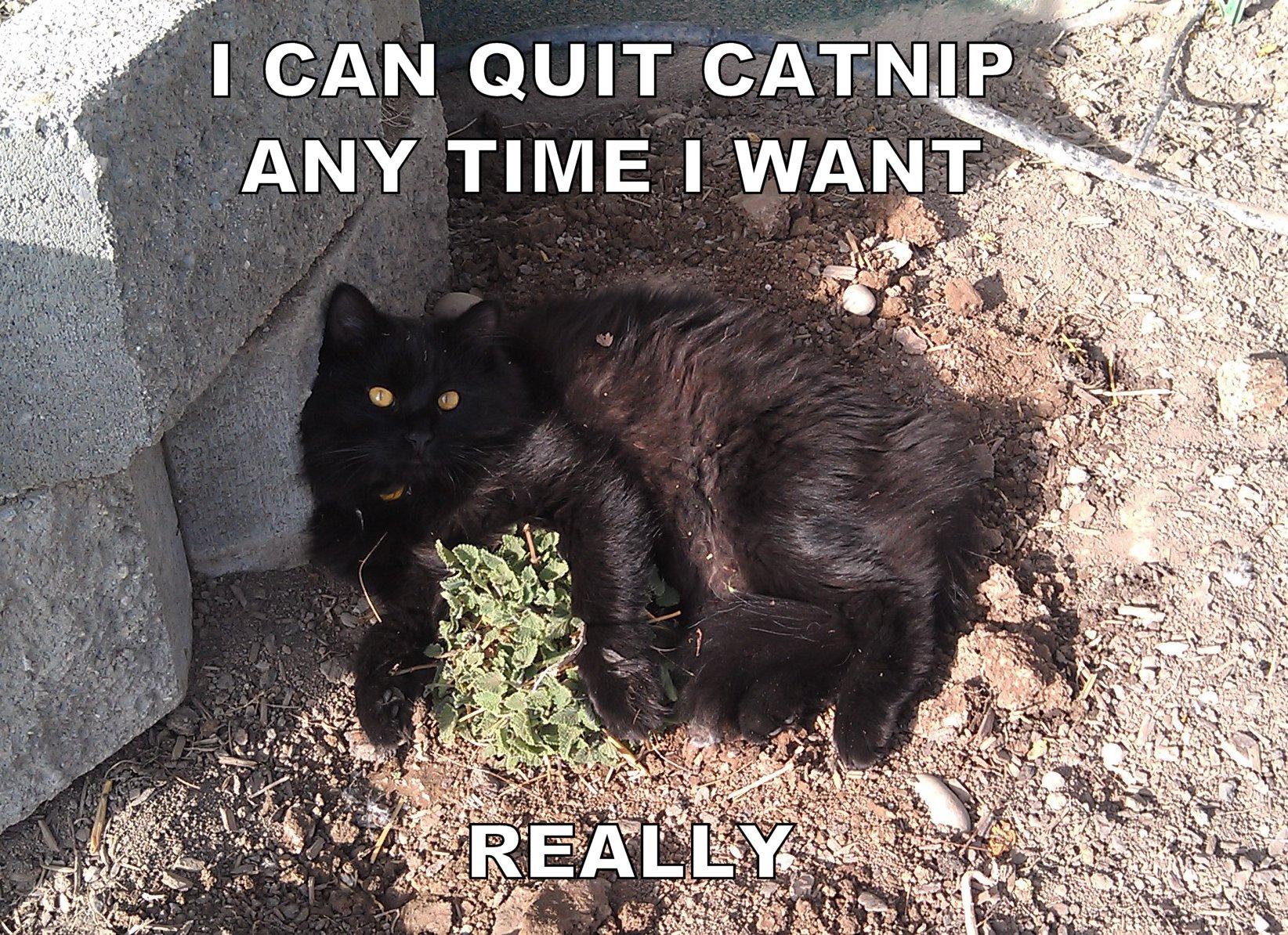 CatnipAddiction